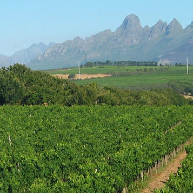 Cape Wine Routes