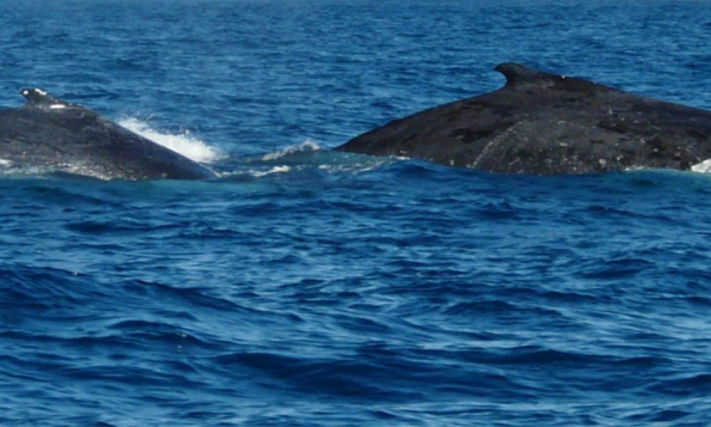 Whale_watching
