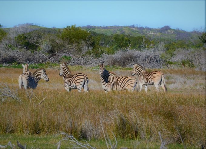 Duinefontein Game Reserve